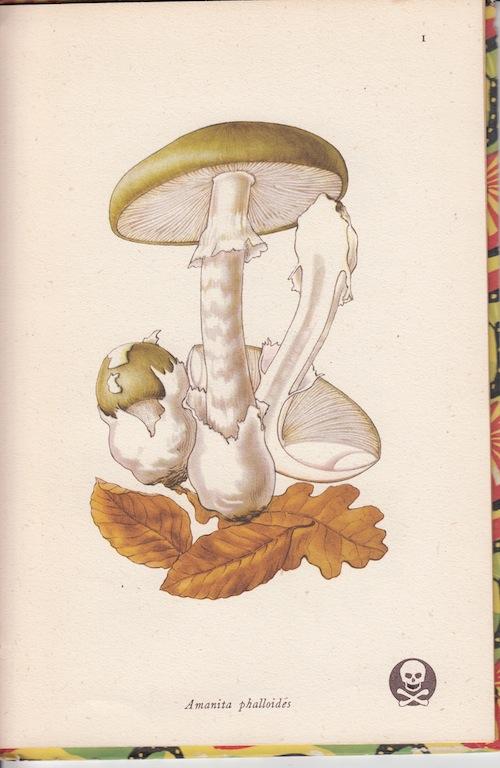 fungi2_20160604_0002